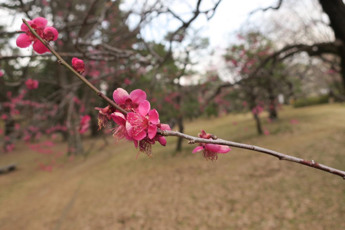 peilan - Japanese to Chinese translator